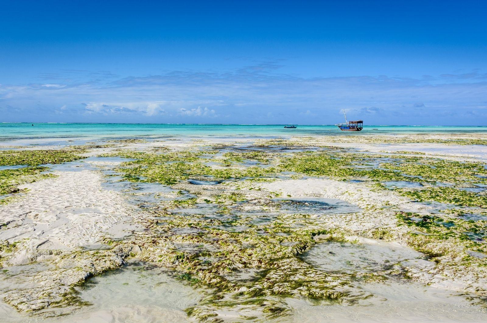 Příliv a odliv na Zanzibaru