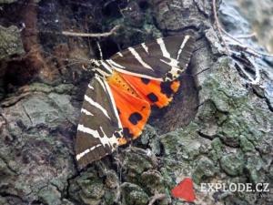 Údolí motýlů - Petaloudes